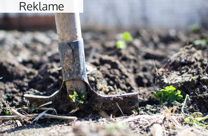 Vær selvforsynende med en spiselig have
