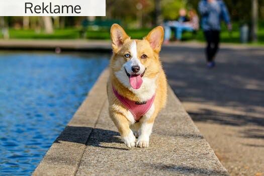 Kom i gang med løbetræning med din hund
