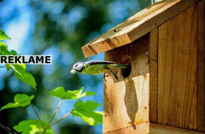 Sådan kan du få mere liv og fuglekvidder i haven
