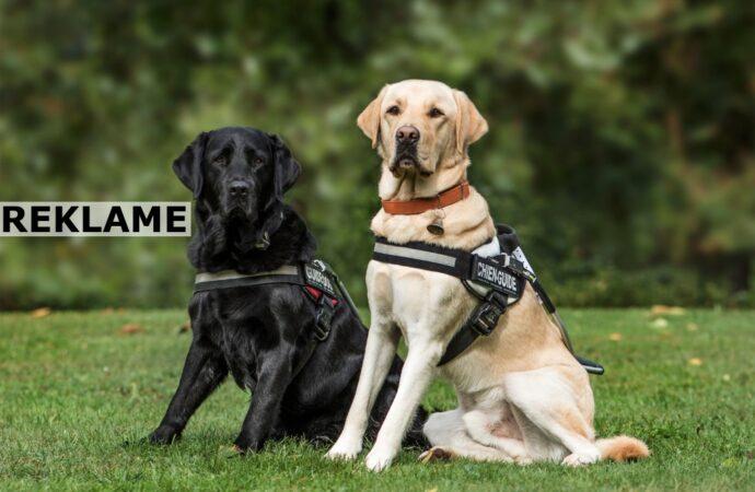 Skal du have hundehvalp? Her er 3 ting, du får brug for