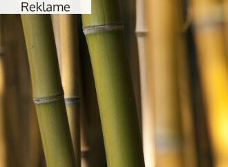 Derfor er vi så mange som er vilde med bambustøj