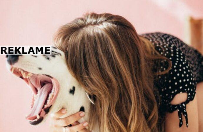 Tips til hundeejeren